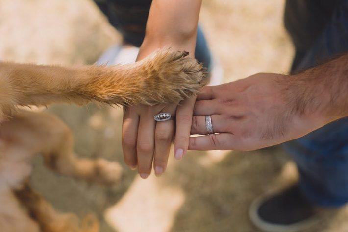 Pet Stop: Μην αγοράζεις, υπάρχει λόγος για να υιοθετήσεις κι εσύ ένα αδέσποτο