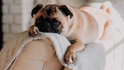 Οι 3 μεγαλύτερες φοβίες του σκύλου σου – Μήπως φταις κι εσύ;