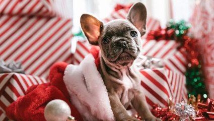 Ζώδια και δώρα: Τι πρέπει να τους πάρεις τα Χριστούγεννα για να τους ξετρελάνεις