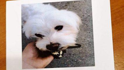 60 μέρες στους δρόμους: Το post που «ένωσε» ξανά σκύλο και ιδιοκτήτη όταν οι ελπίδες είχαν χαθεί
