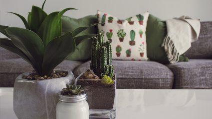 Τρία πανέμορφα φυτά εσωτερικού χώρου που θέλουν ελάχιστο πότισμα