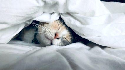 Τρεις συνήθειες πριν τον ύπνο που είναι καταστροφικές για το δέρμα σου