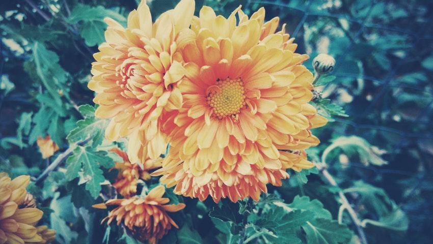 Tα τρία «απαγορευμένα» φυτά για εσένα που έχεις αλλεργίες την άνοιξη