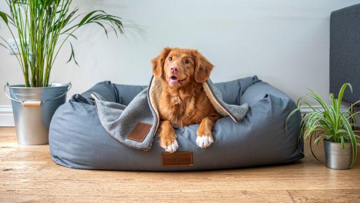 10 + 5 παράξενα ελληνικά ονόματα για τον σκύλο σου που μας κάνουν να λιώνουμε