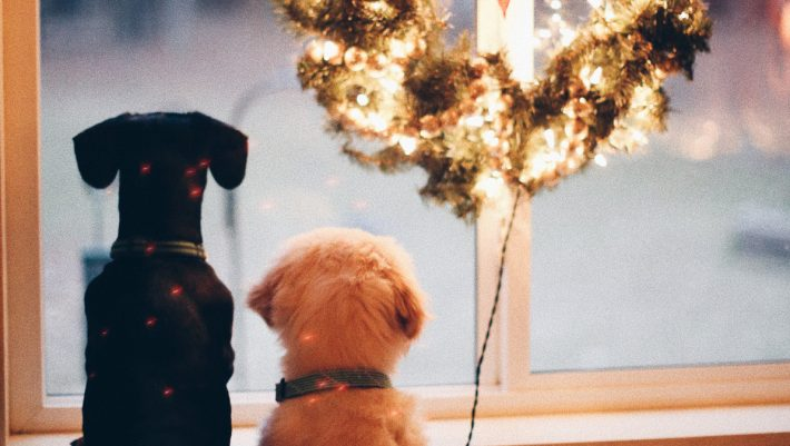 «Raise the Woof!»: Από σήμερα, το σκυλάκι σου έχει το δικό του χριστουγεννιάτικο τραγούδι