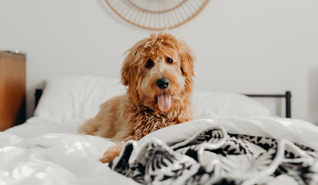Η επιστήμη απεφάνθη: Τελικά πρέπει να μοιράζεσαι το κρεβάτι σου με τον σκύλο σου;